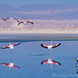 Flamingos Landing