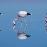 Tres Flamingos