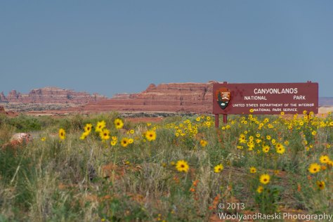 Canyonlands Wildflowers