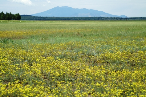 Springtime bursts with yellow.