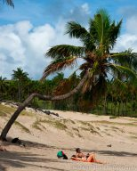 Anakena Palm