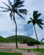 Palms, sand and Moai
