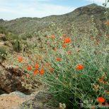South Mountain Spring