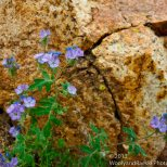 Delicate flowers in a desert