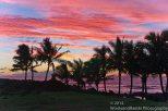 EI Sunset Palms 1