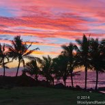 EI Sunset Palms 1