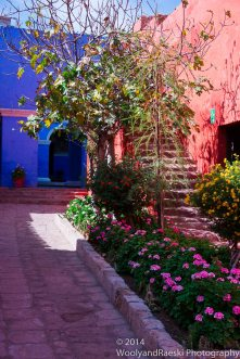 Vivid colors are everywhere!
