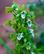 Zapallar Flowers 01