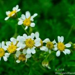 Zapallar Flowers 07