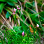 Zapallar Flowers 12