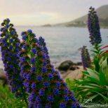 Zapallar Flowers 15