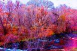 Oak Creek Acid in the fall