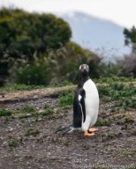 I'm a Gentoo, how about you?