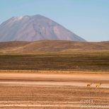 Besides the volcanoes, there were also Vicuña.