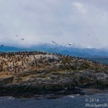 Cormorants_01b