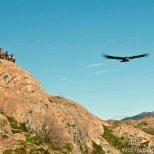 Andean Condor Flyby